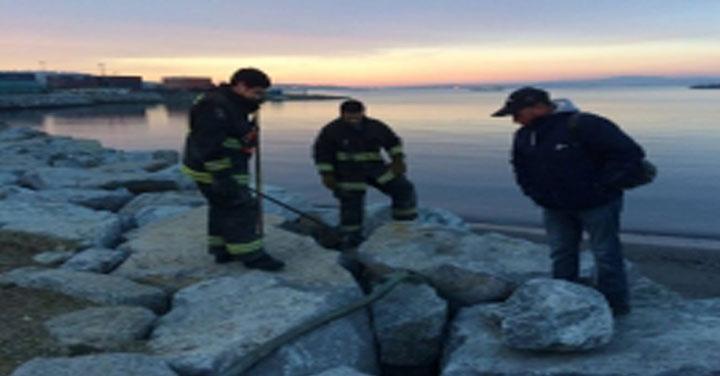 Bomberos de Talcahuano realizó rescate de cachorros