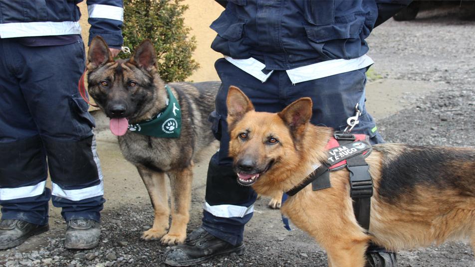 Donan alimentación y atención veterinaria para los perros de rescate del Cuerpo de Bomberos de Temuco
