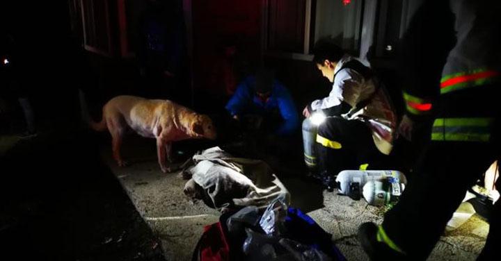 Bomberos de Cochrane auxiliaron a canino asfixiado tras incendio